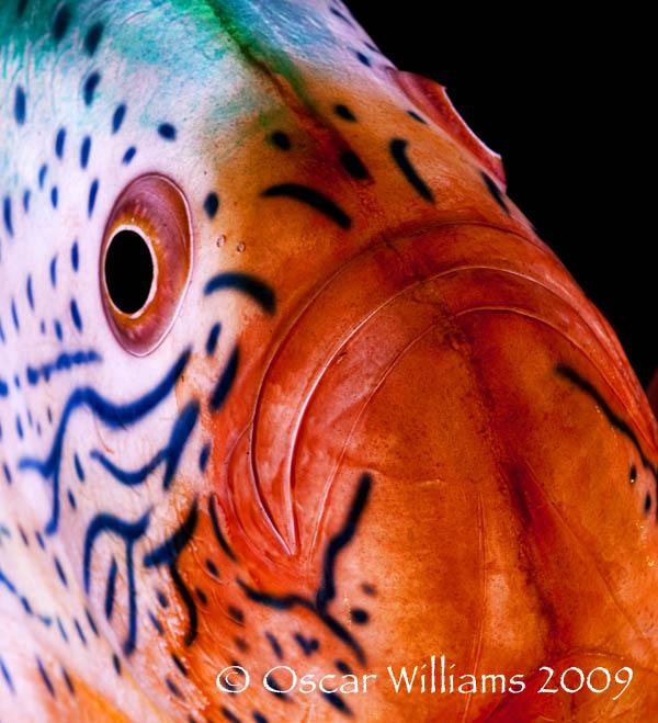 Close-up of Donald Lipiski's Sunfish